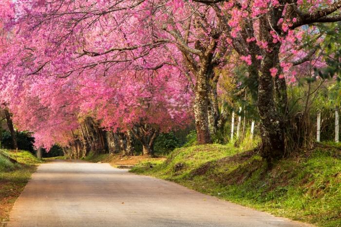 Khun Wang_Chiang Mai 2